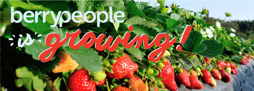 Berry People Announce Seasonal Transition to Santa Maria and Watsonville for Organic Strawberries