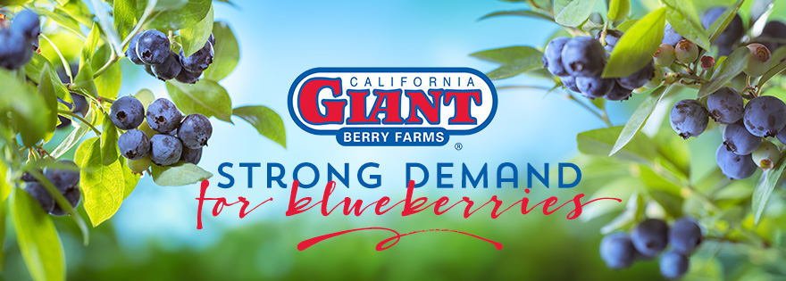 Strong Demand Marks Blueberry Transition; Cindy Jewell Talks Shop