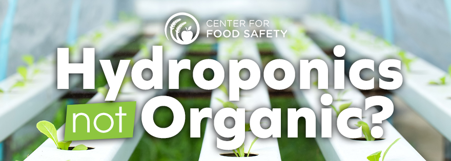 Center for Food Safety Files Legal Action to Prohibit Hydroponics from Organic