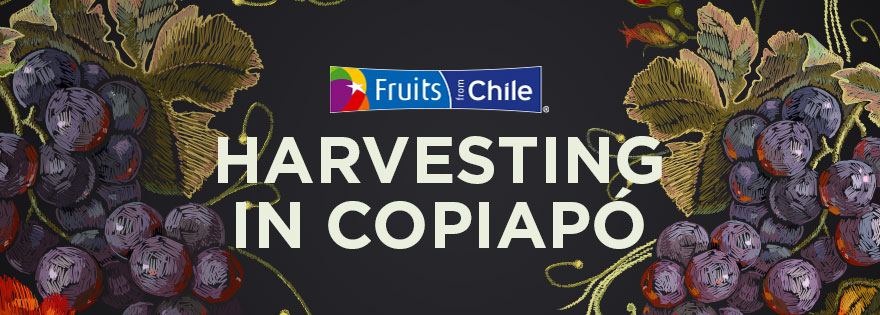 New Varieties Shine as Chile Begins Harvesting In Copiapó
