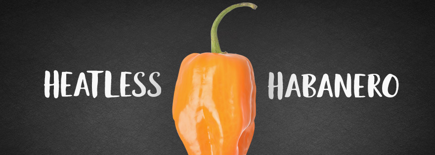 New Habanero Variety Boasts Heatless Profile