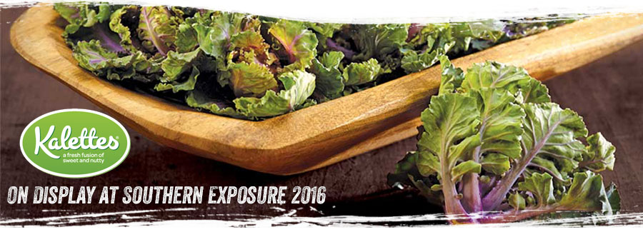 Kalettes® Get Spotlight at Southern Exposure 2016