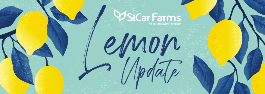SiCar Farms Releases Update on Lemon Quality and Volume