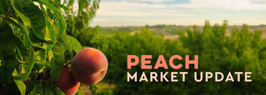 Stemilt Growers' Brianna Shales Talks Organic Peaches
