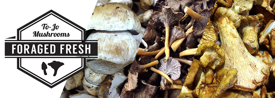 To-Jo Mushrooms Promotes New Foraged Fresh Specialty Mushroom Program