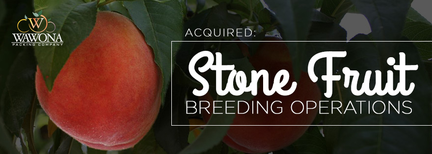 Wawona Acquires Stonefruit Breeding Operations and Associated Genetics of Burchell Nursery
