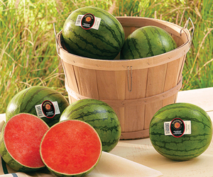 how to choose a seedless watermelon