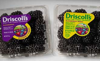 Driscoll's Highlights it Blackberry Initiatives and Growing Program