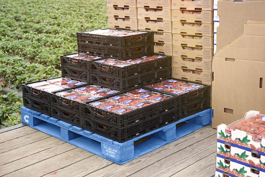 Use of high-quality pallets are reportedly expected to reduce damage and increase customer satisfaction