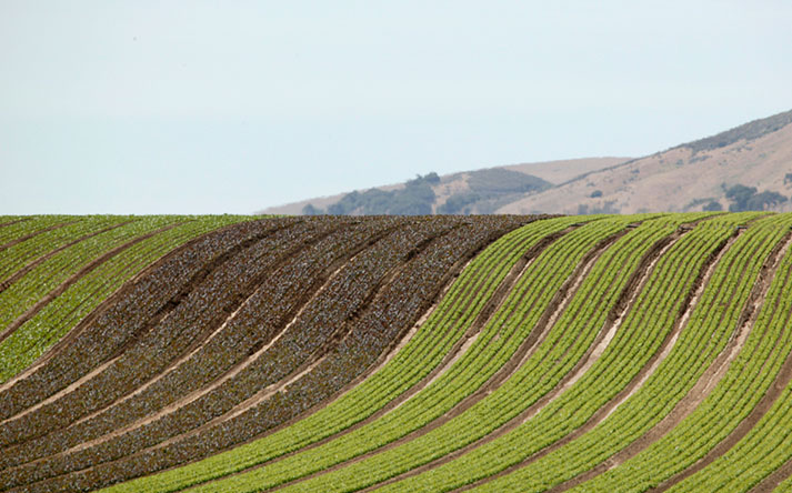 Adam Brothers fields in the Santa Maria Valley