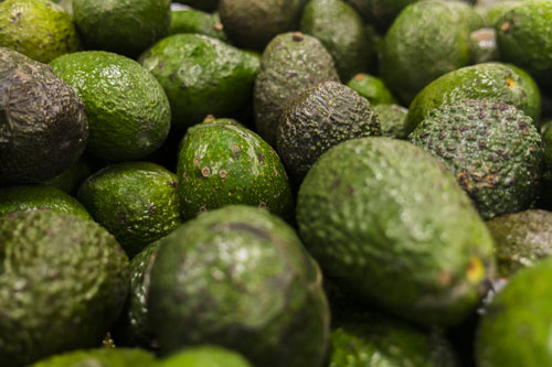 According to the Ministry of Public Security (SSP) in Uruapan, Michoacán, some 7,000-some-odd pounds of stolen avocados were recovered from a trailer