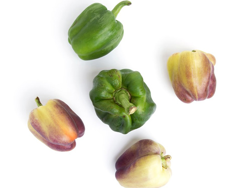 Some of the imperfect produce to be sold includes: tomatoes, peppers, squash, cucumbers, eggplants, and zucchini
