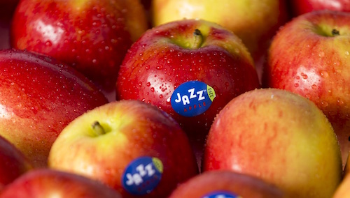 This fresh new crop of JAZZ™ Apples have a fresh new look.