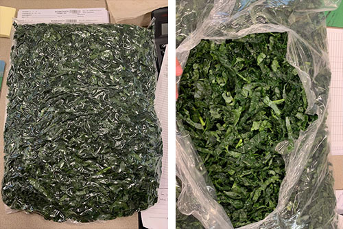 Boskovich Farms is debuting a new Chopped Bagged Kale (with the stems removed for foodservice) ahead of the Organic Produce Summit (OPS)