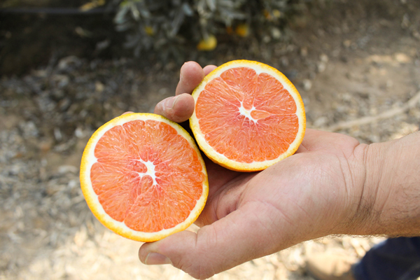 Bee Sweet Citrus welcomes the new harvest and anticipates a strong season ahead