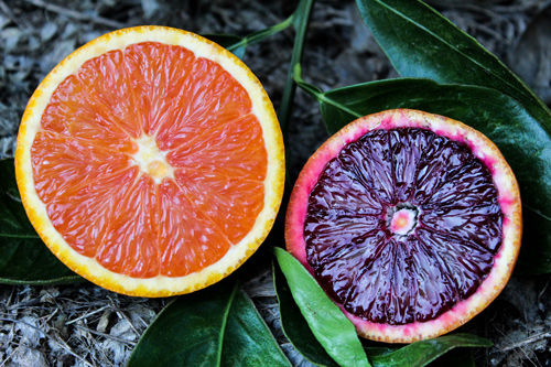 Bee Sweet Citrus is here to meet seasonal demand for specialty varieties like Cara Cara Navels and Blood Oranges—just in time for Valentine's Day promotions