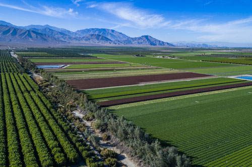 The Coachella Valley, in California, where Grimmway Farms' premium organic options are grown