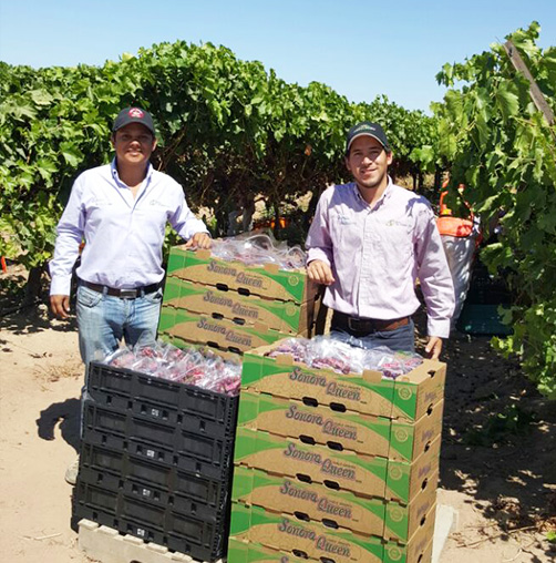Esteban Coppel on the left and David Ricardo Quiroz on the right grape growers from Hermosillo, Sonora, Mexico