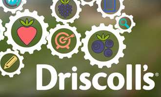 Driscoll's Shares What It Takes to Ensure Quality Proprietary Berries