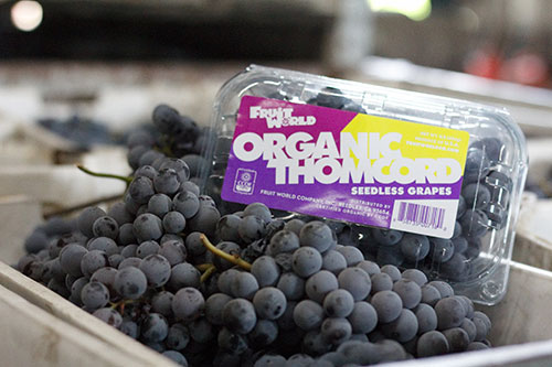 With July just around the corner, the fruit company gears up to start promoting its table grapes
