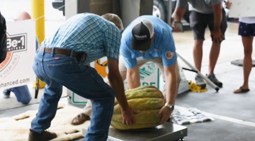North Carolinian retiree Danny Vester spent months pampering the 65.9 pound cantaloupe. Photo Credit: The News & Observer