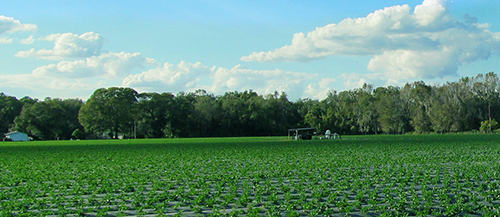 Gladstone Land owns farmland in Arizona, California, Colorado, Florida, Michigan, Nebraska, North Carolina, Oregon, and Washington