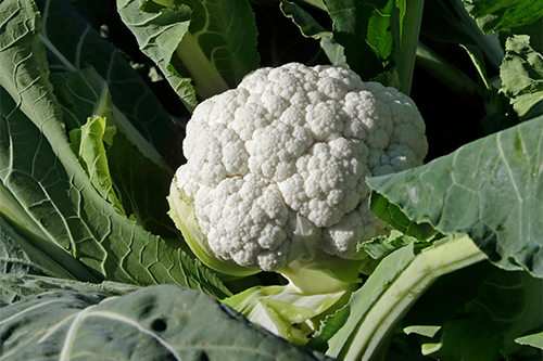 Gold Coast Packing's broccoli and cauliflower are in good supply