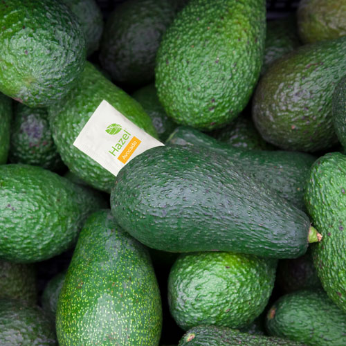 AMR Agro is one of the Dominican Republic's largest green-skin avocado packer and exporters