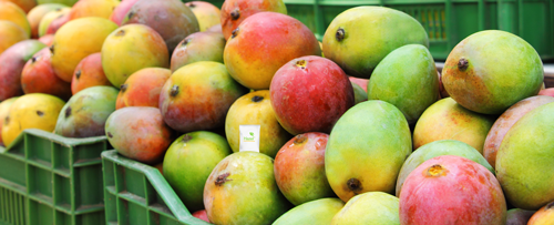 The report stated the tropical fruit category is the third most valuable category globally, trailing only apples and bananas