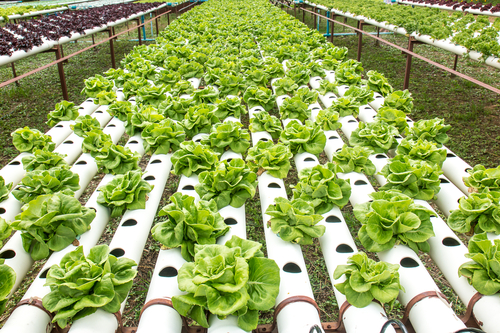 The Center for Food Safety (CFS) has filed a new legal action asking the USDA to prohibit hydroponic operations from the Organic label