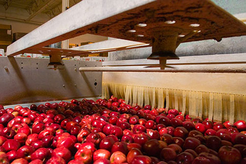 By acquiring Jack Brown Produce, Riveridge is adding new varietal availability, increasing volume by 50 percent, and effectively becoming a one-stop solution—providing quality Michigan apples year-round to its retail partners