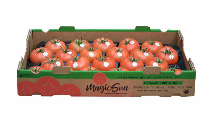 Magic Sun Tomatoes grows conventional TOVs, Beefsteak, and Cocktail tomatoes right now, and will start up grape tomatoes this fall