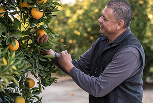Together, Veg-Fresh Farms and Redlands Foothill Groves will expand retail and foodservice citrus opportunities and provide a consistent and year-round program