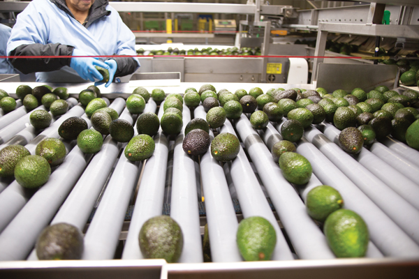 Mission Produce's new shelf-life extension technology, Avolast, can help operators add a few additional days of shelf life to their avocados