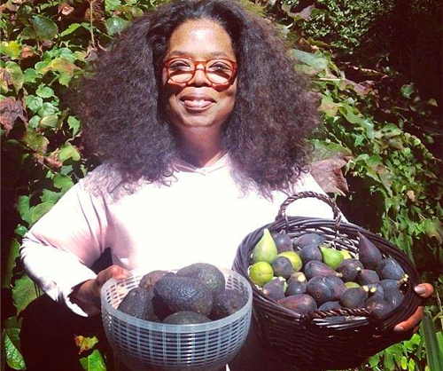 In a recent episode of The Daily Show with Trevor Noah, Oprah expressed her disdain for paying for avocados—a disdain the led her to own her own avo orchard
