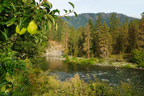 First introduced in 2014, the Rushing Rivers brand highlights some of the two best pear growing locales in the world: the Wenatchee and Entiat River Valleys