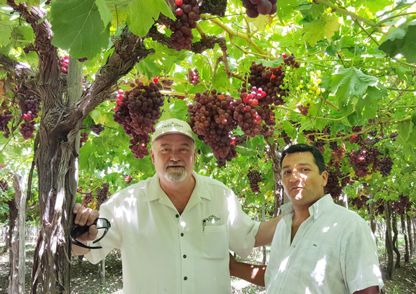 Julian De La Cruz (left), International Field Operations Manager, Crown Jewels Produce, and Grower Partner Cristian Correa (right) of Ferrani SPA, Chile