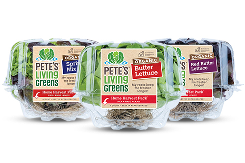 Pete's Living Greens offers organic versions of their most popular varieties including Organic Red Butter Lettuce, Organic Spring Mix, and Organic Butter Lettuce