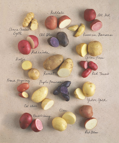 Potatoes have been championed for health benefits, such as being rich in vitamins, minerals, and antioxidants
