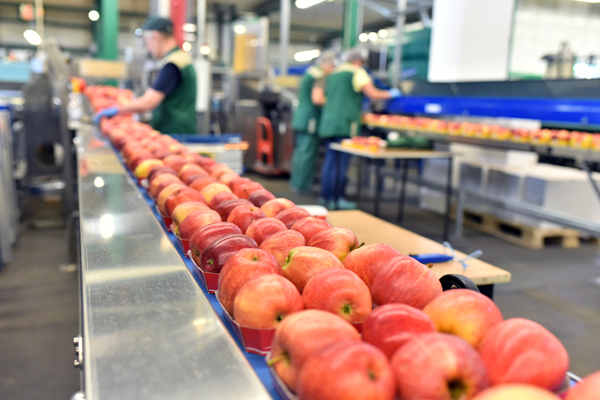 Produce Pro Software's new tool suite features powerful reporting capabilities, both on-screen and in scheduled reports, that can help the produce industry analyze past production for future needs