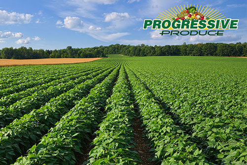 Dominic DeFranco will be managing Progressive Produce's Traditional+ division, which includes the company's potato, yams, and onion categories