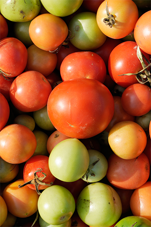 To prevent the spreading of the tomato brown rugose fruit virus, the USDA issued a Federal Order that will implement new testing protocols
