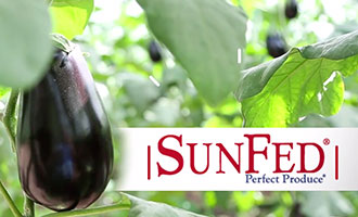SunFed Offers a Look at its Expanding Eggplant Program