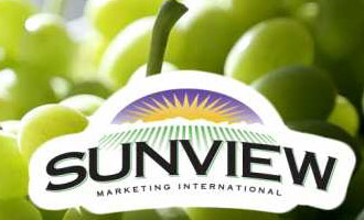 Sunview Marketing International's Marko Zaninovich Gives us an Exclusive Look at Stella Bella Seedless Grapes
