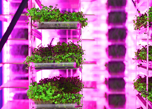 Agt3 Holdings, an indoor vertical growing technology company, announced the appointment of A.G. Kawamura to its Board of Agriculture Industry Leaders and Innovators