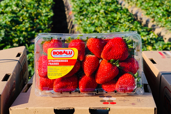 Western Veg-Pro is currently in the Central Mexico strawberry growing region, though there are still shippers harvesting in Santa Maria, Oxnard, and Florida at this time